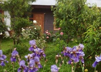 Гостевой дом «Роза»